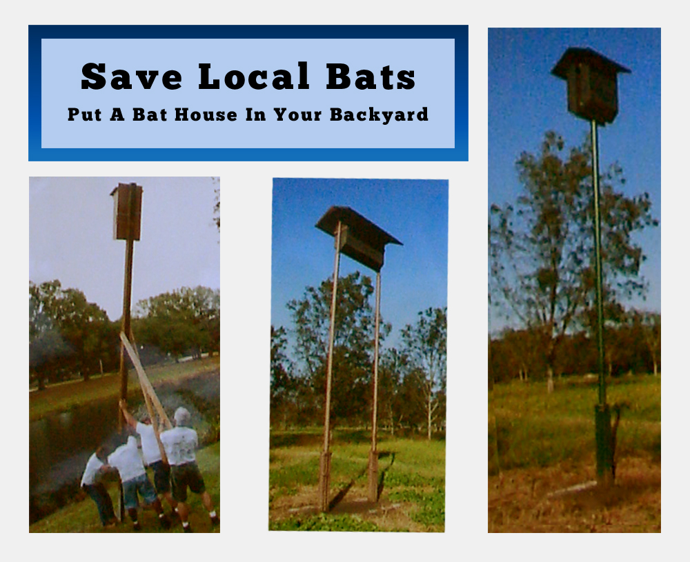 Call A bat removal pro TO Install Bat Houses on your property and help conserve local bat populations. 855-699-4535