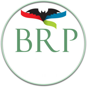 bat removal pro new 100 percent removal and exclusion