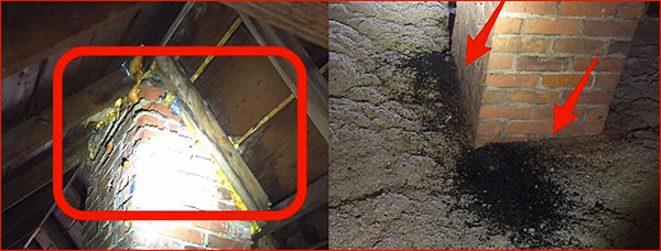 creature removal chimney-guano smaller compressed file