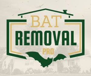 Bat Removal: The Humane Way Or Highway!