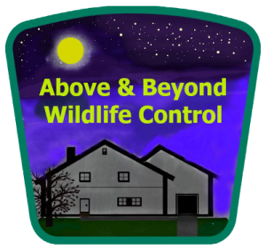 Above and Beyond Wildlife  - The Spring Hill Florida Bat Removal Company Mobile Logo