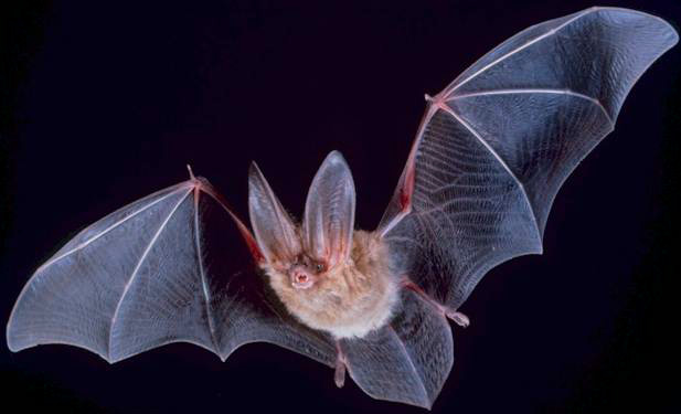 Does It Matter Which Bat Removal Company You Choose?