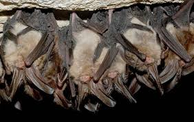 Bats in Winter: Activity in the Coming Months
