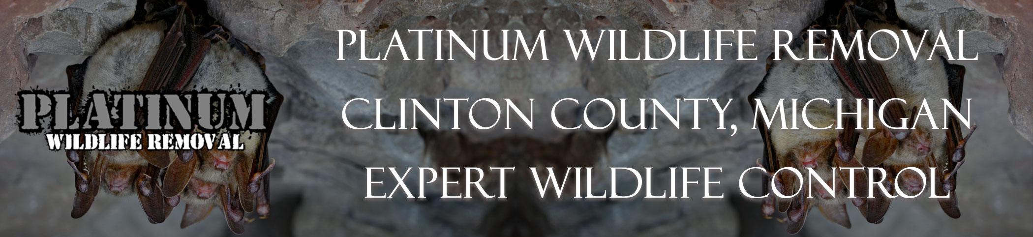 Clinton-County-Michigan-Bat-Removal-header-Image