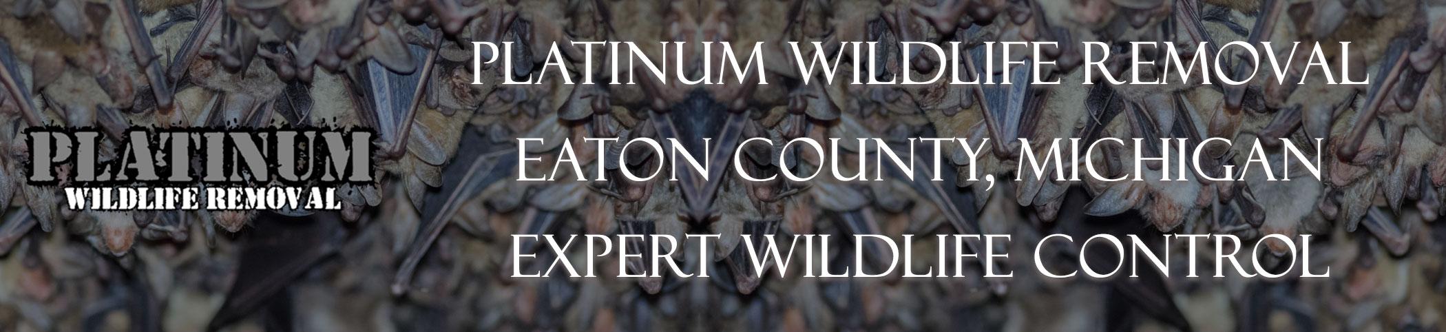 Eaton-County-Michigan-Bat-Removal-header-Image