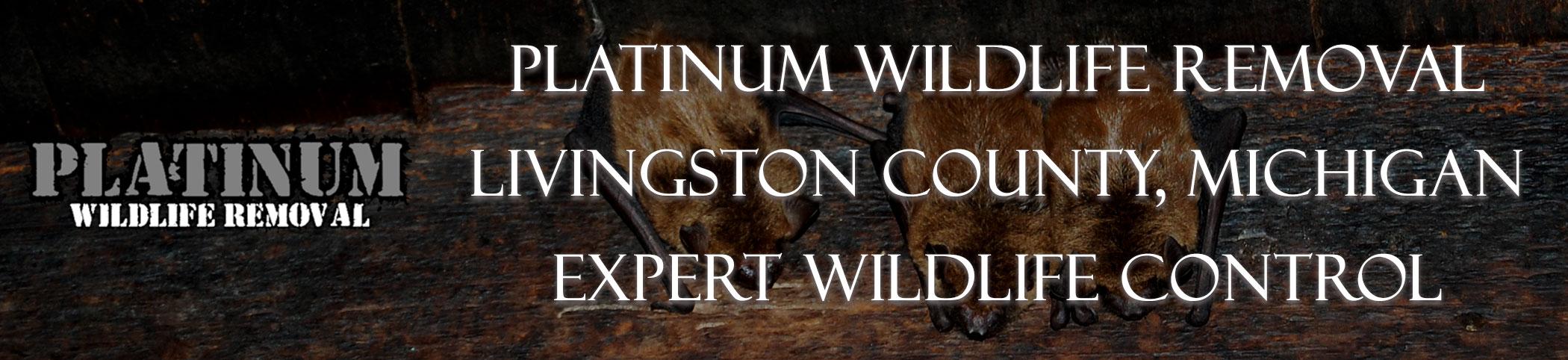 Livingston-County-Michigan-Bat-Removal-Header-Image