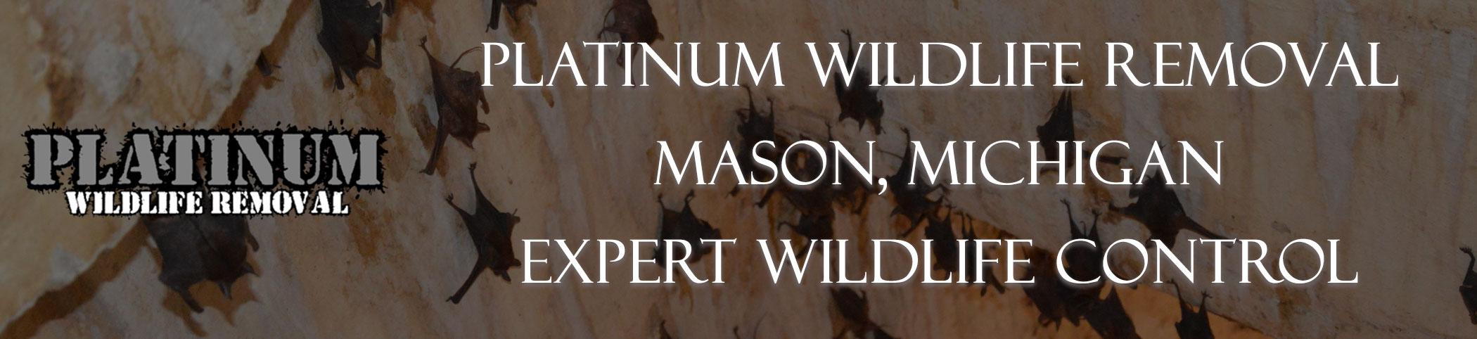 Mason-Michigan-Bat-Removal-header-Image