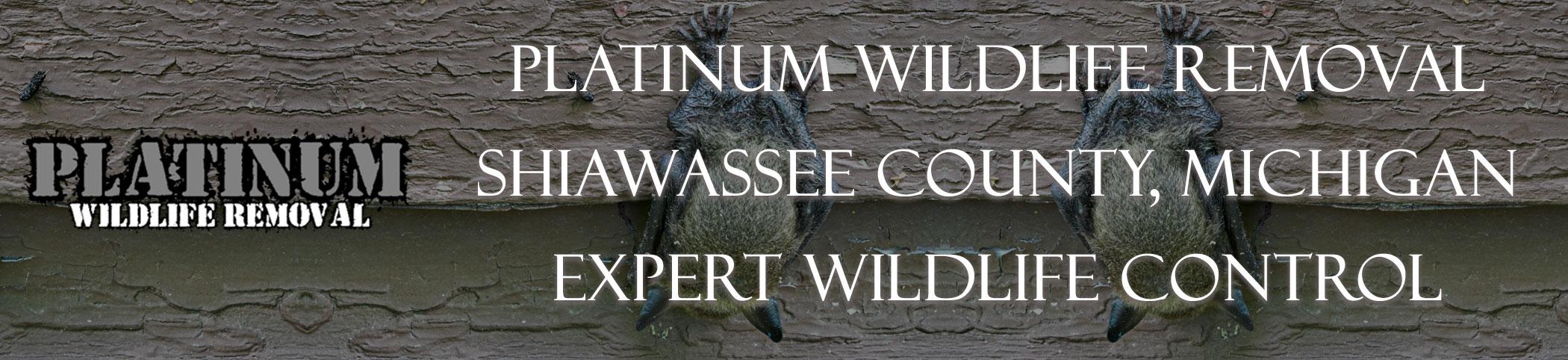 Shiawassee-County-Michigan-Bat-Removal-header-Image
