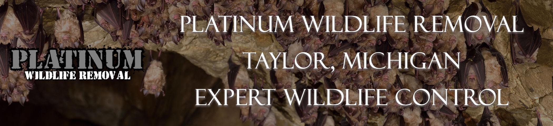 Taylor-Michigan-Bat-Removal-header-Image