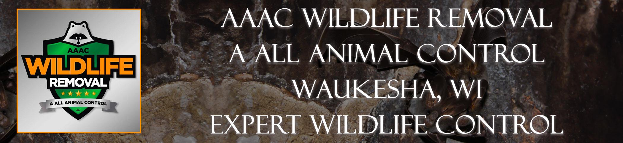 aaac-wildlife-removal-Waukesha-wisconsin