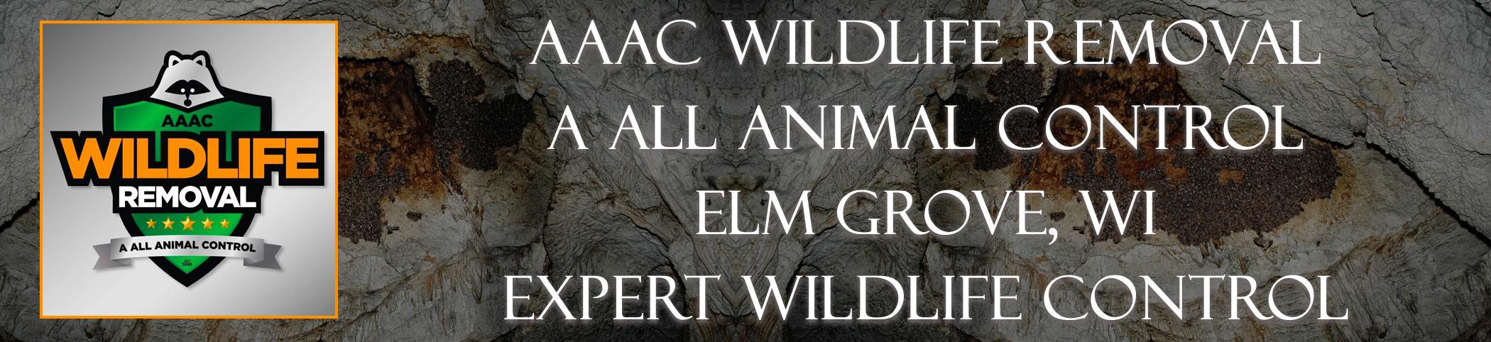 aaac-wildlife-removal-Elm Grove-wisconsin