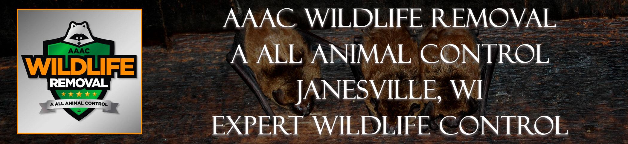 aaac-wildlife-removal-Janesville-wisconsin