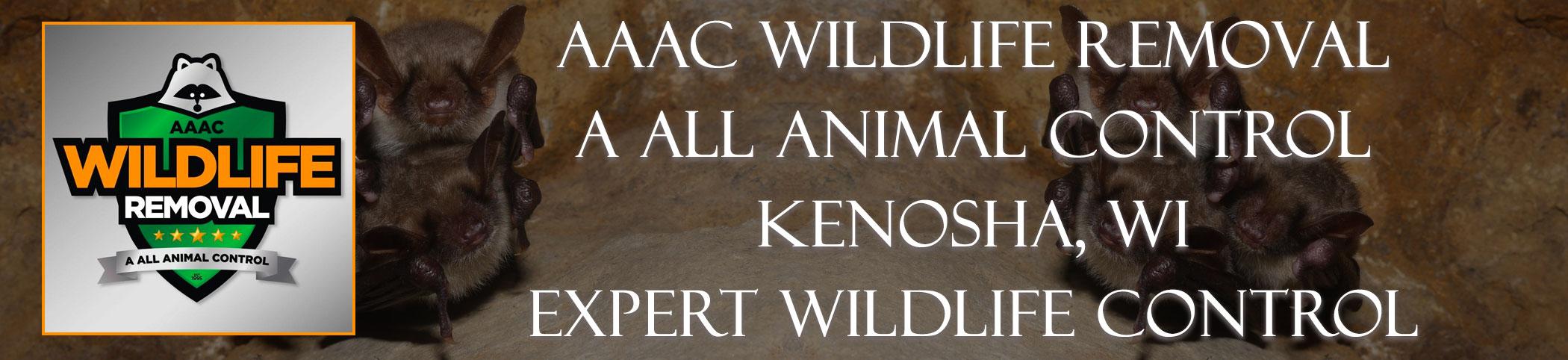 aaac-wildlife-removal-kenosha-wisconsin