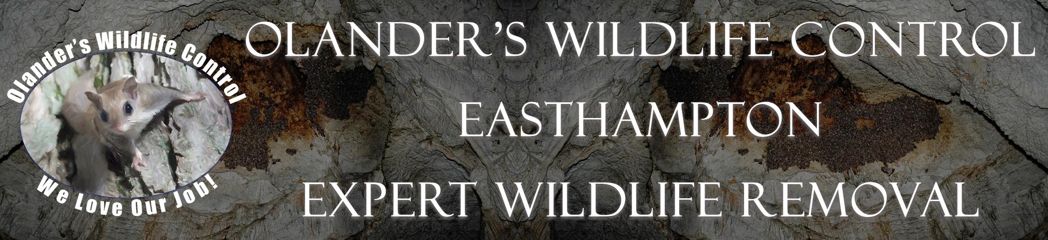 olanders-wildlife-control-easthampton-mass-header-image