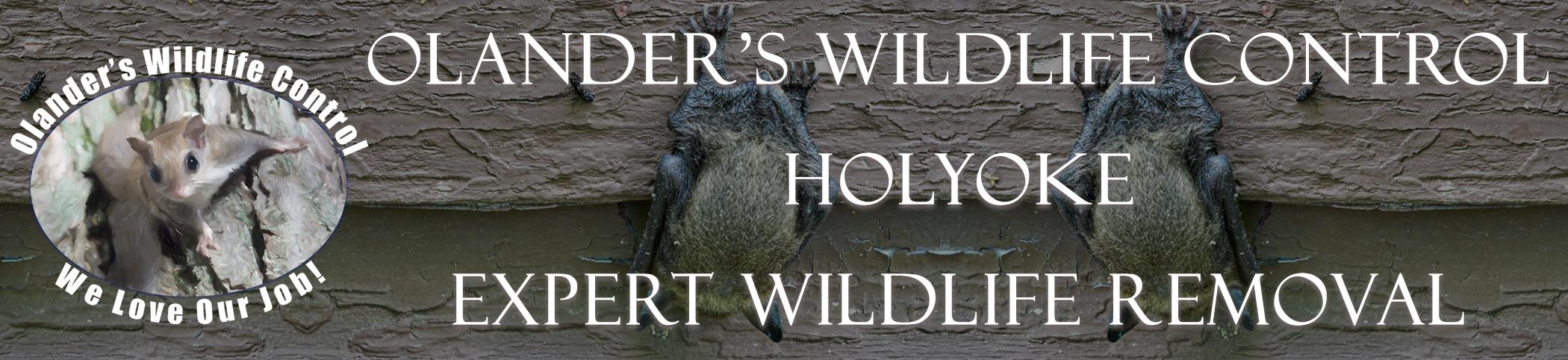 olanders-wildlife-control-holyoke-mass-header-image