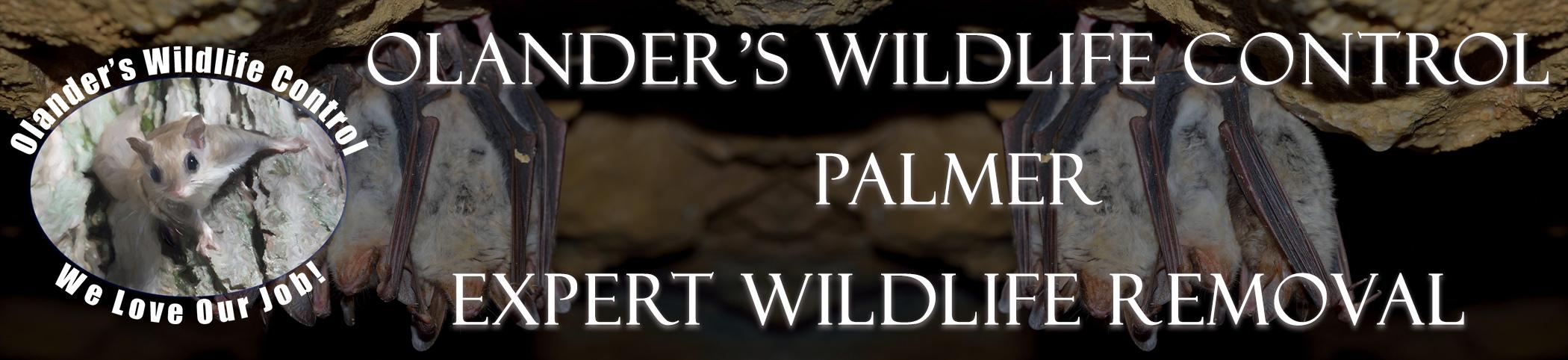 olanders-wildlife-control-palmer-mass-header-image
