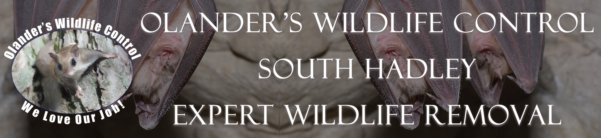olanders-wildlife-control-South Hadley-mass-header-image