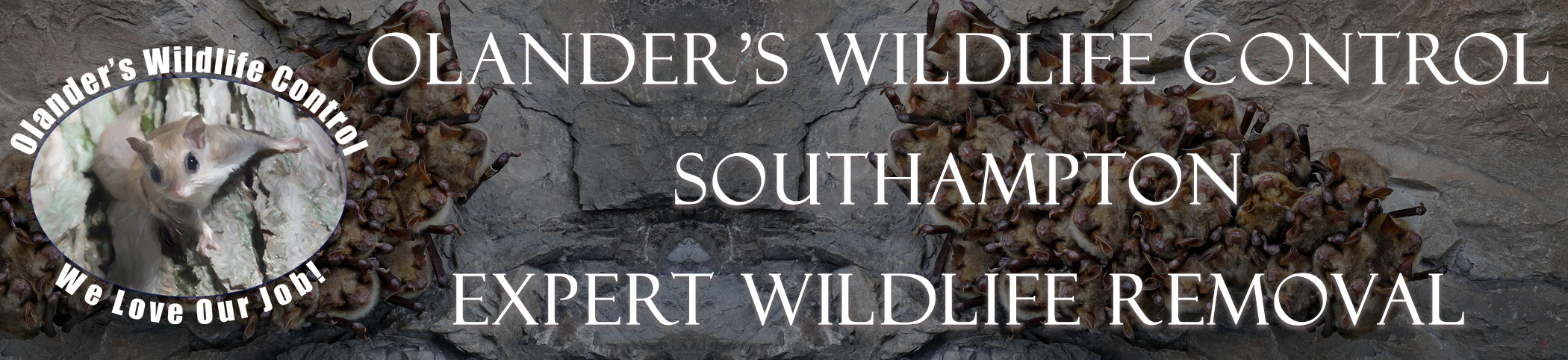 olanders-wildlife-control-southampton-mass-header-image