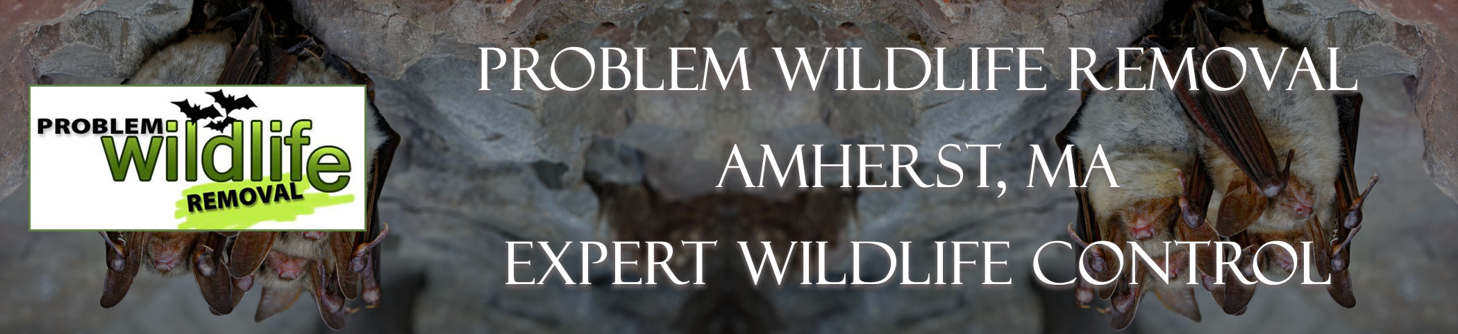bat removal and bat exclusion by problem wildlife removal Amherst ma