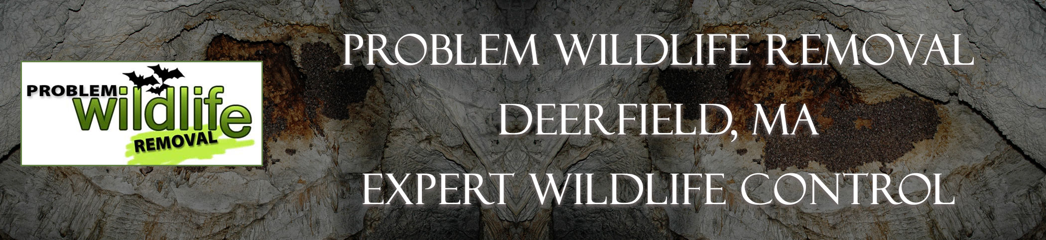 bat removal and bat exclusion by problem wildlife removal Deerfield ma