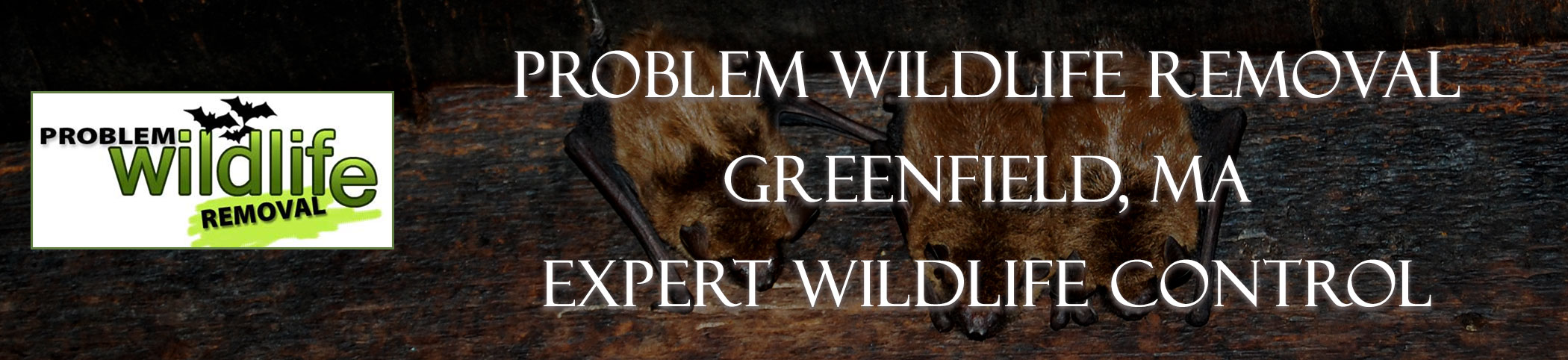 bat removal and bat exclusion by problem wildlife removal greenfield ma