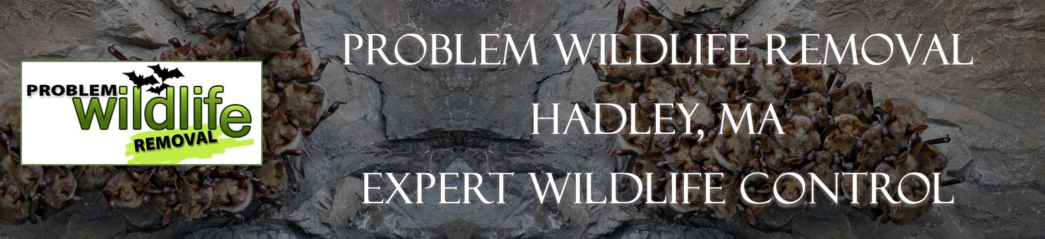 bat removal and bat exclusion by problem wildlife removal Hadley ma