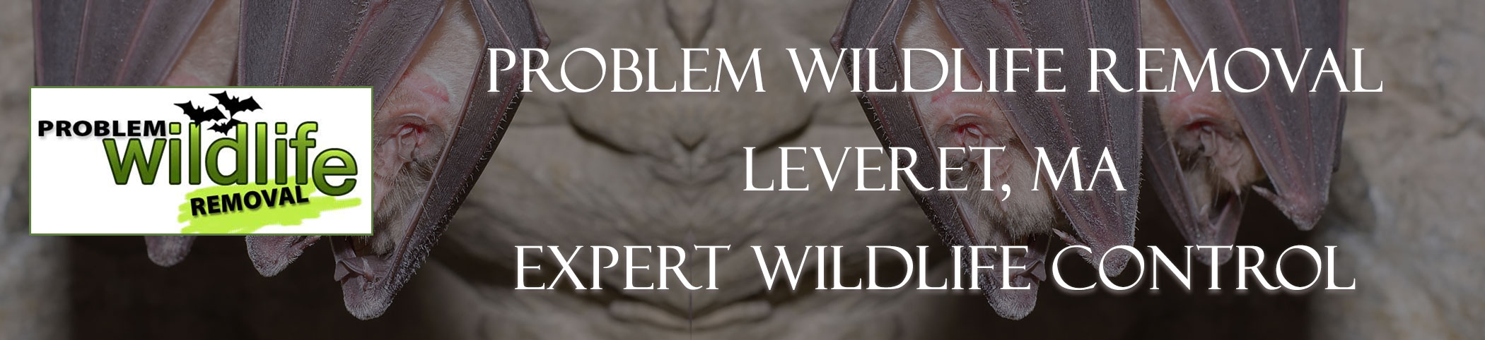 bat removal and bat exclusion by problem wildlife removal Leveret ma