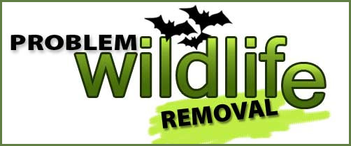 bat removal and bat exclusion by problem wildlife removal
