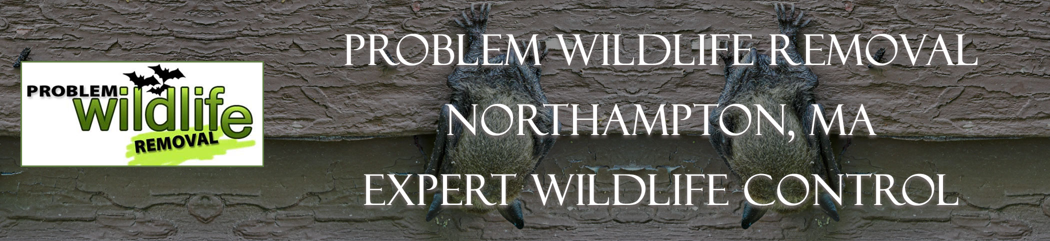 bat removal and bat exclusion by problem wildlife removal northhampton ma
