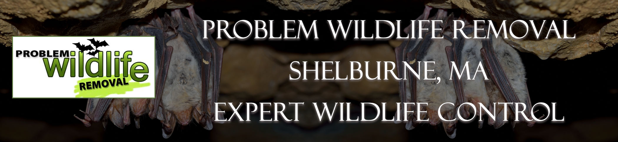 bat removal and bat exclusion by problem wildlife removal Shelburne Falls ma