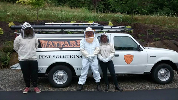 Wayfare Pest Solutions - A leader in Pest Removal and Control. We're here to serve your needs 24/7/365. Call us now!