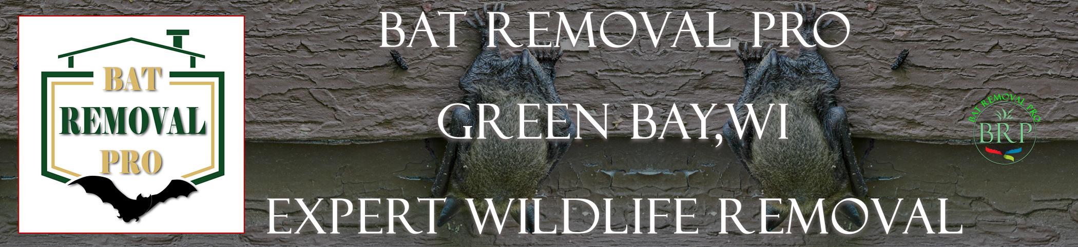 anchorage_alaska_HEADER_IMAGE bat removal pro