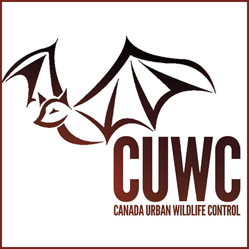 Gloucester - Canada Urban Wildlife Control INC. digital badge