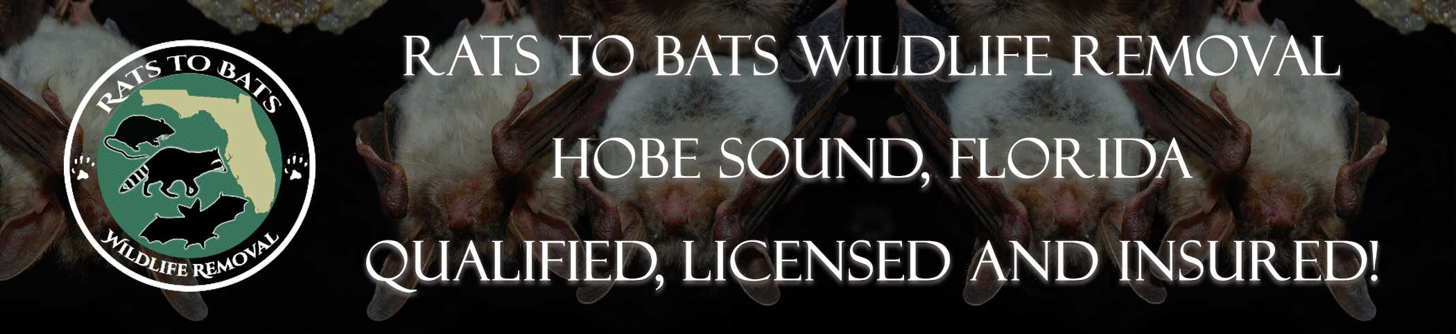 Animal Pros Bayshore Gardens Florida Bat Removal And Wildlife Removal Header Image