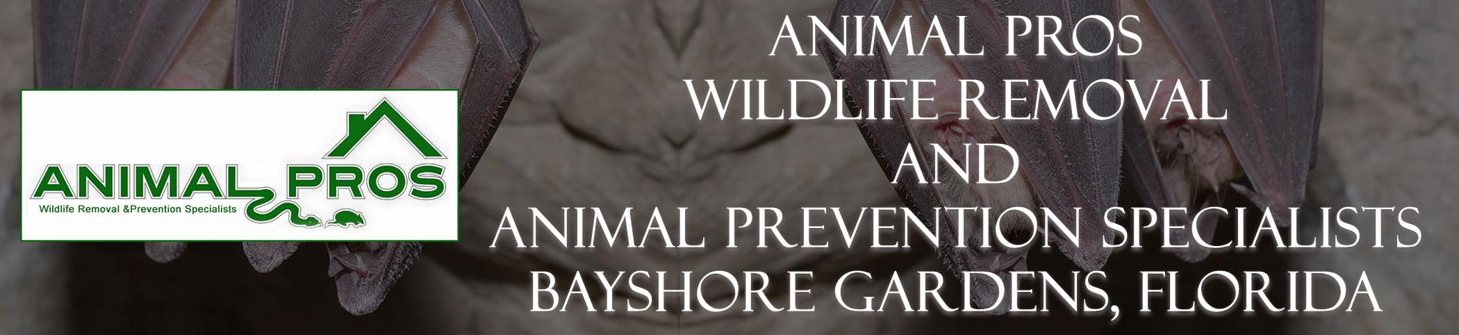 Animal Pros Bayshore Gardens Florida Bat Removal And Wildlife Removal Header Image