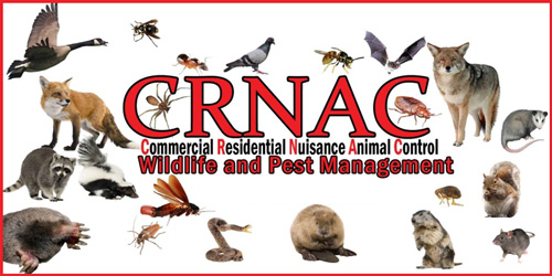 CRNAC Wildlife And Pest Management Bat Removal Chicago Illinois