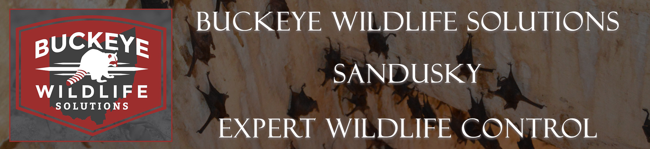 Pickerington-buckeye-wildlife-solutions-ohio-header-image