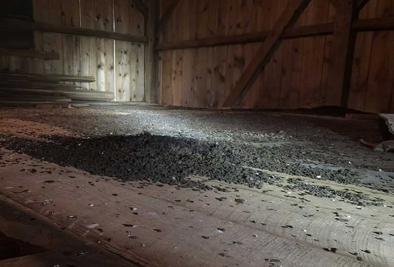 Bat Guano Contamination photo of guano in a customer's barn.