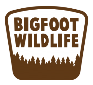 Graphic: BigFoot Wildlife Logo at Bat Removal Pro ANdrews North Carolina page