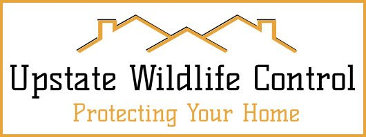 Graphic:  Upstate Wildlife Control Digital Badge